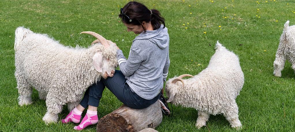 Angora goats and Alles Mooi